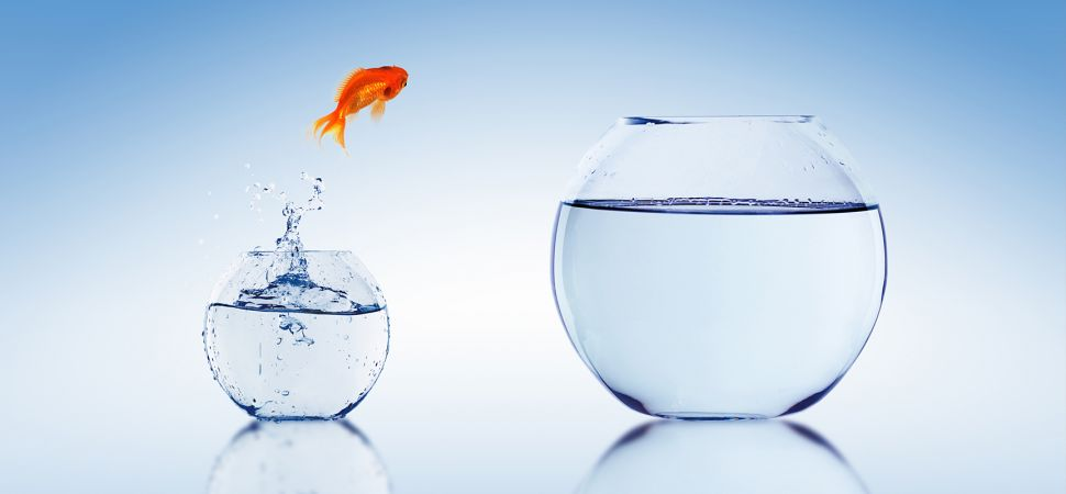 fish-jumping-out-of-bowl-1725x810_14378